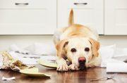 犬の問題行動の画像